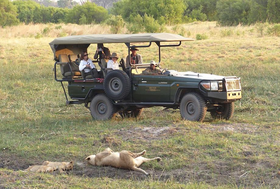 Selinda Lion Spotting