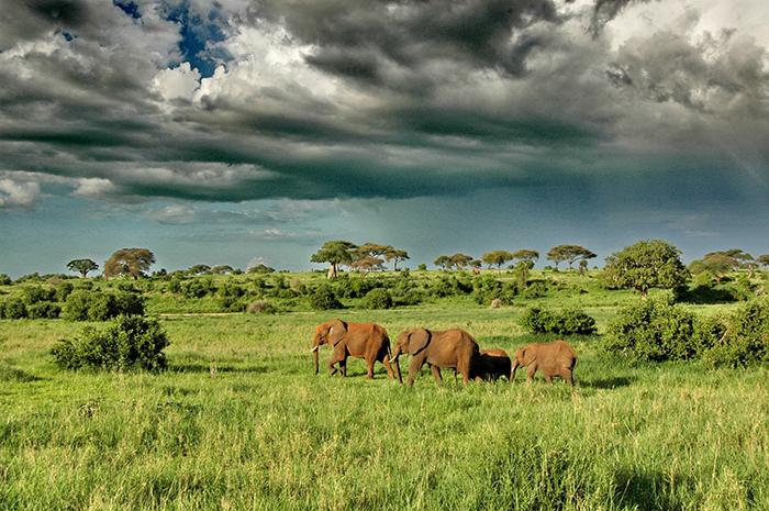 Elephants at Moswari